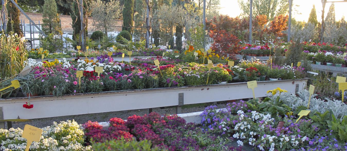 Creació i manteniment de jardins i terrasses