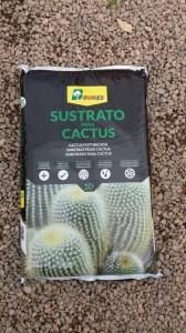 Terra per cactus