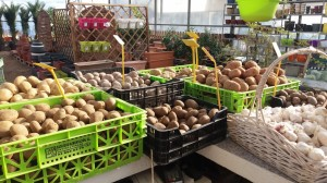 Alls i patates de sembra