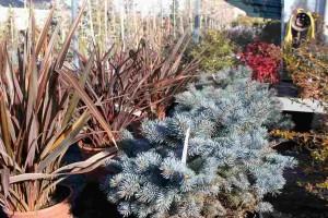 arbustos (Copiar)